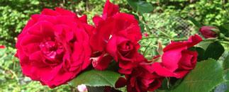 Rödbo Plantor och Växter HB
