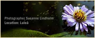 Fotograf Susanne Lindholm
