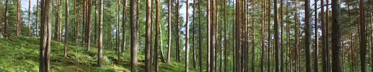 Moelven Byggmodul AB - Byggmästare & Byggnadsentreprenörer, Bygg- & Anläggningsarbeten