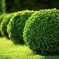 Trädgårdstjänster