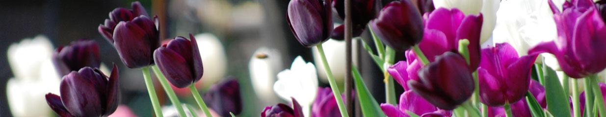 Plantmarknaden i Lindesberg - Handelsträdgårdar, Caféer, Trädgårdsmästare & Trädgårdsskötsel, Trädgårdsmöbler, Trädgårdsmaskiner & Trädgårdsredskap, Möbelaffärer, Blomsterhandel