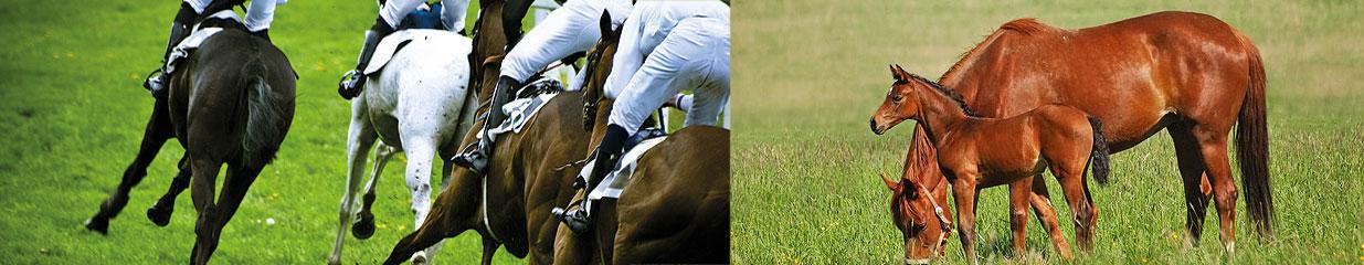 Rs Mustang AB - Ridklubbar & Ridskolor, Hästsportbutiker, Hästuppfödningar & Stuterier, Övriga tillverkningsindustrier, Sportaffärer & Friluftsutrustning, Hästverksamhet