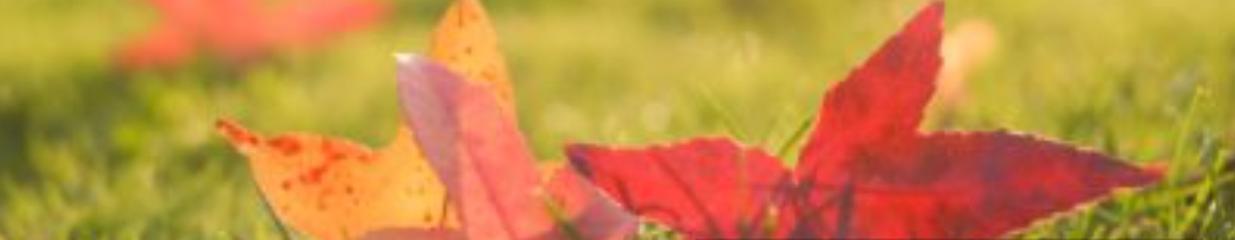 Salkhallens Naprapatklinik AB - Akupunktur & Akupressur, Massage, Yoga & Meditation, Naprapater, Fotvård, Hälsorådgivning, Alternativmedicin, Företagshälsovård