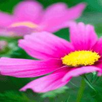 Växter & råd